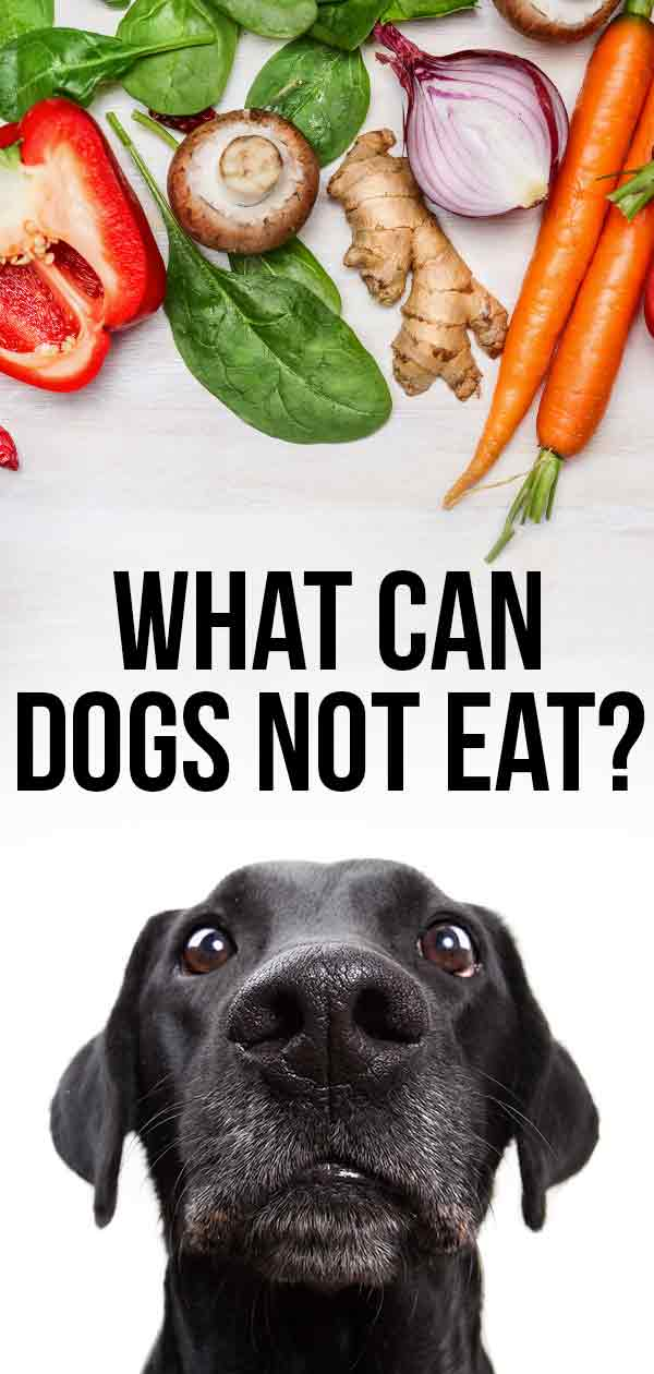 what can dogs not eat