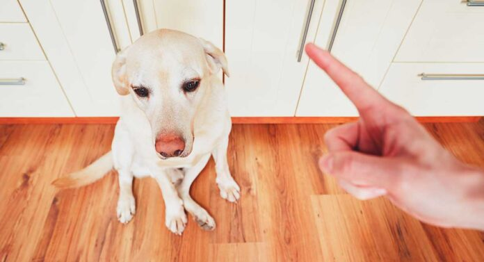 Why Do Dogs Eat Poop and How To Stop Your Dog From Eating Poop