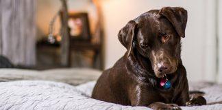 Benadryl For Dogs