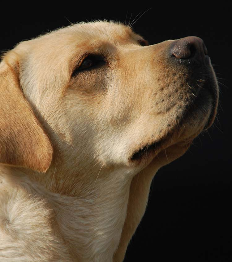 Why are dogs noses wet - and other fascinating facts about dog's noses