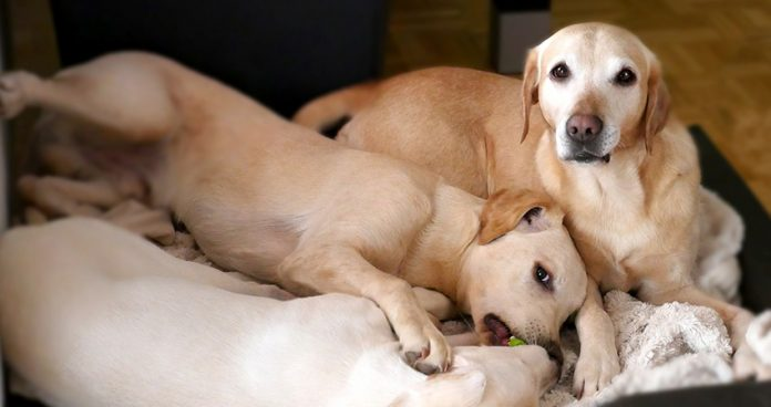 A Guide To Afoxolaner For Dogs