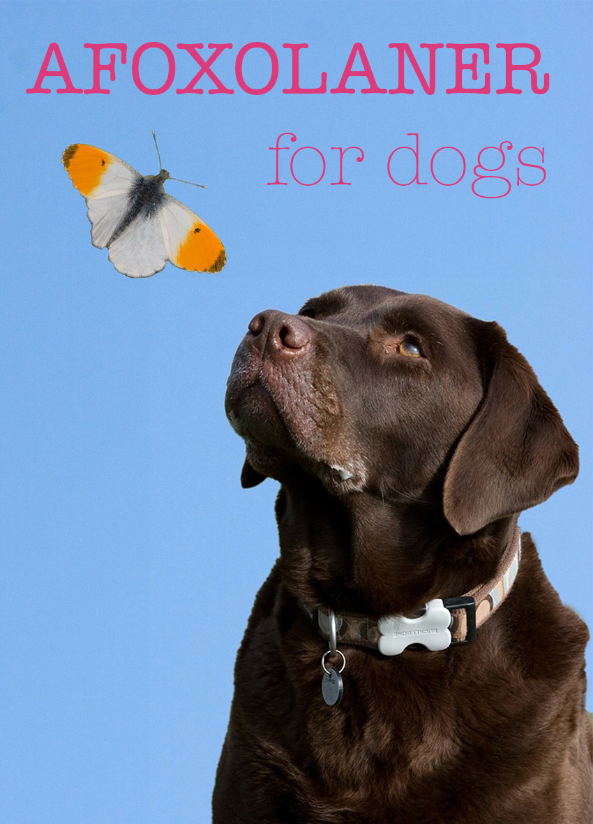 Afoxolaner for dogs - a guide to dosage, treatment and side effects