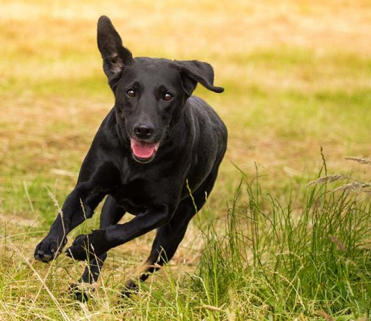 Zoomies - dog behavior that looks a little crazy may be quite normal. Find out all about the zoomies here