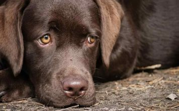 Do Dogs Cry - Dog Tears And What They Mean