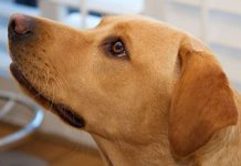 Adult Dog - A Resource Guide For Adult Dog Owners