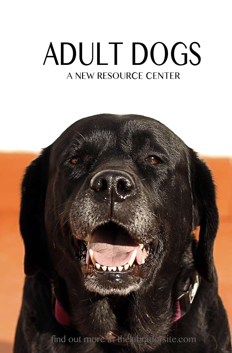 Adult dog information - teeth and dental care, neutering, training and socializing older dogs, and much more