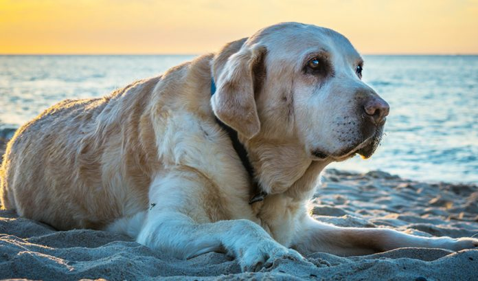 Common cancers in dogs - a guide to signs, symptoms and treatment