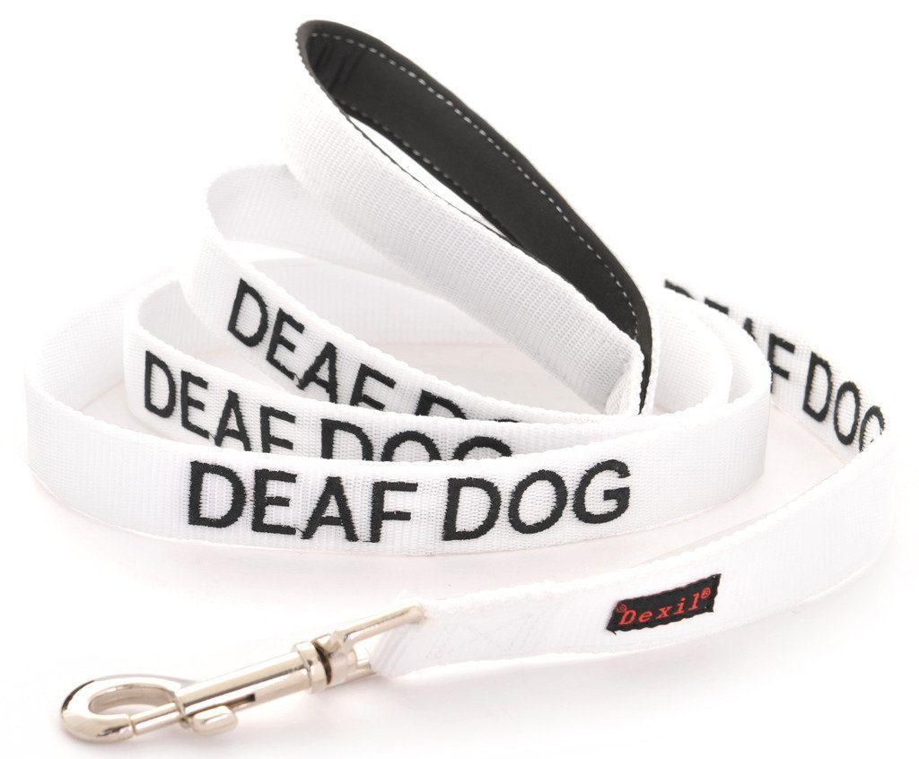 Deafness In Dogs The Labrador Site