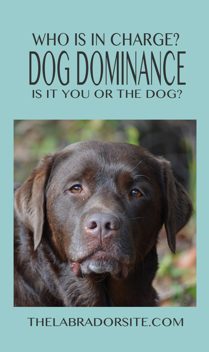 A guide to dog dominance and alpha dogs