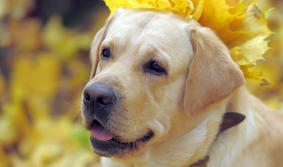 Adult Dog Training Tips