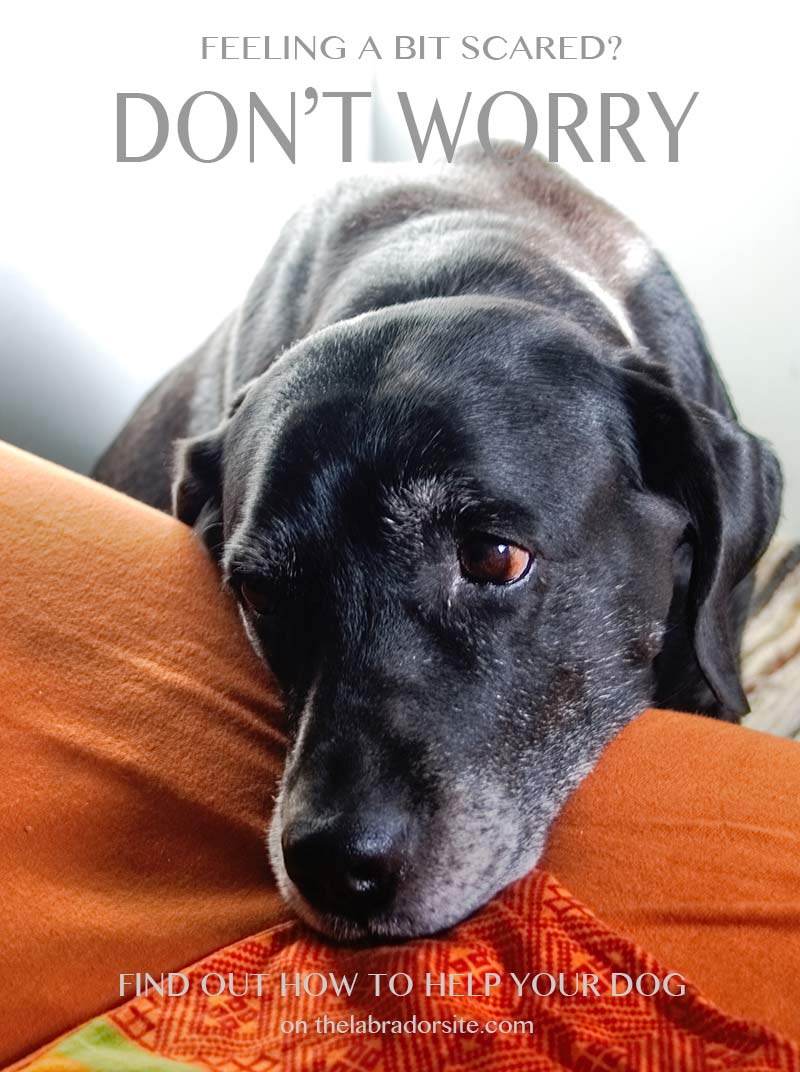 Socializing an older dog requires patience. He may prefer to stay at home at first