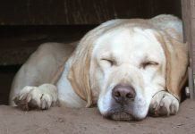 Relax my dog! How to get your dog to chill