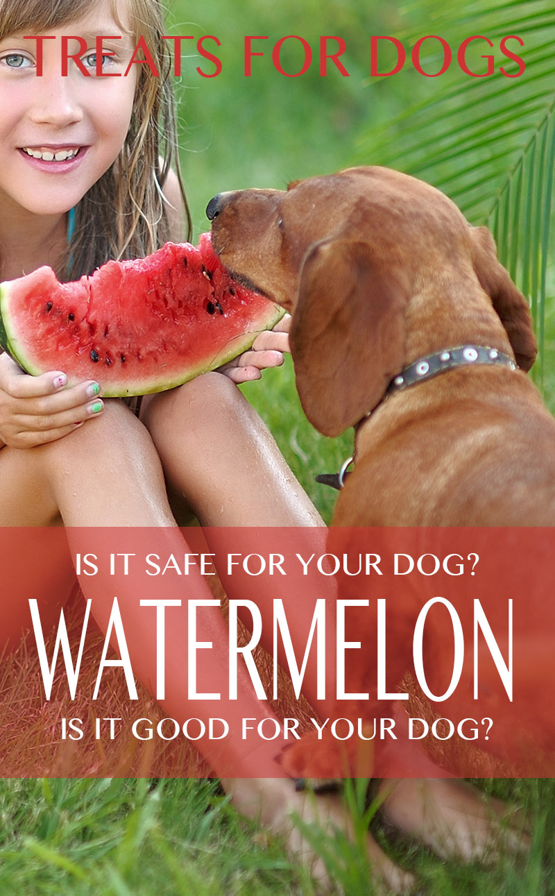 Can Dogs Eat Watermelon - Is Watermelon