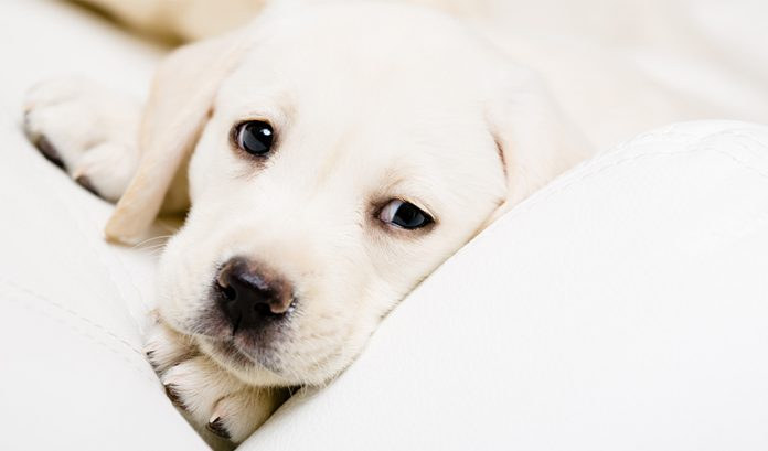 Puppy Worms - A Complete guide to treatment, diagnosis and prevention