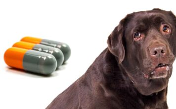 cephalexin for dogs