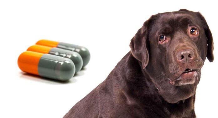 cephalexin for dogs