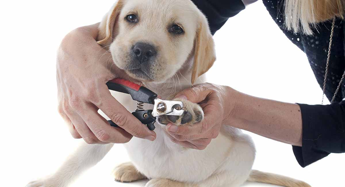 Best Dog Nail Clippers And Grinders And How To Use Them