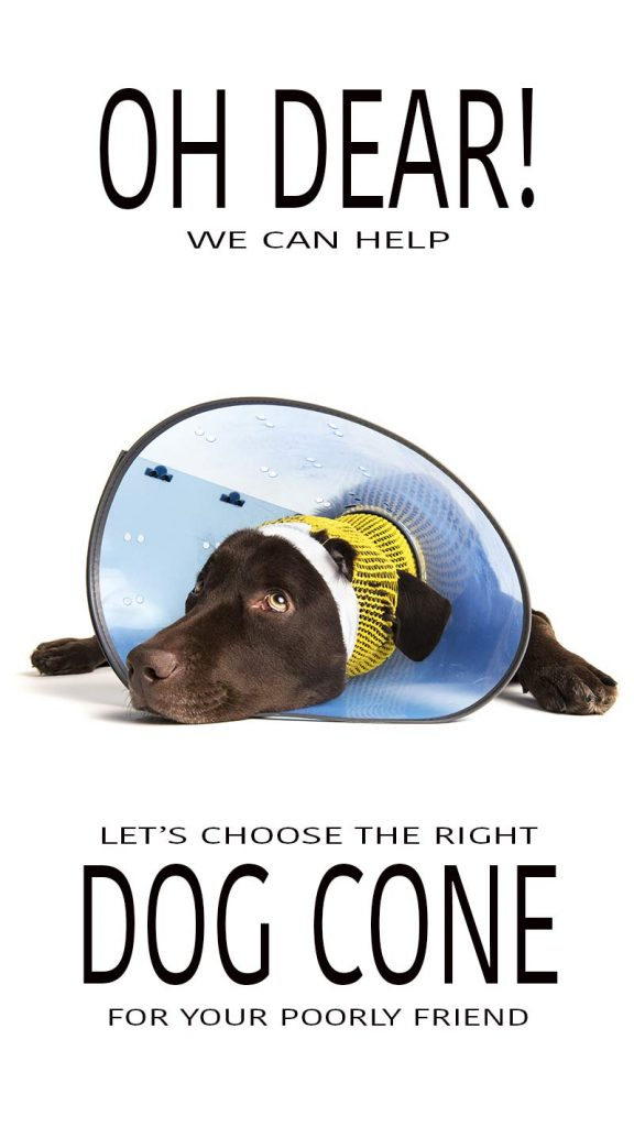 Choosing the best dog cone for your poorly pet