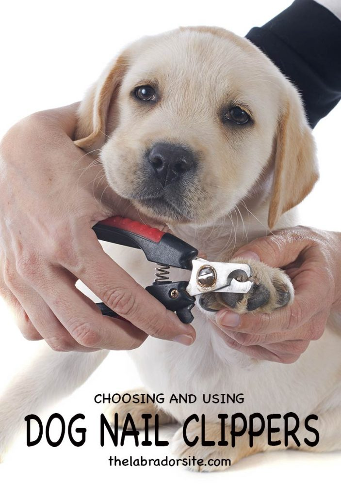 Dog clippers - how to choose the right clippers for your dog or puppy and how to use them safely