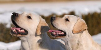 A guide to dog pregnancy
