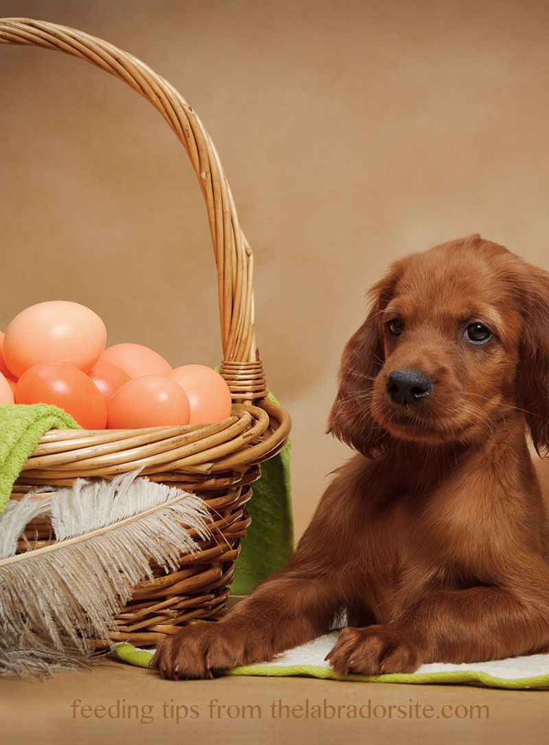 "We tackle the question ""Can dogs eat eggs?"" Find out if eggs are safe for dogs to eat - and what is the best way to prepare them"
