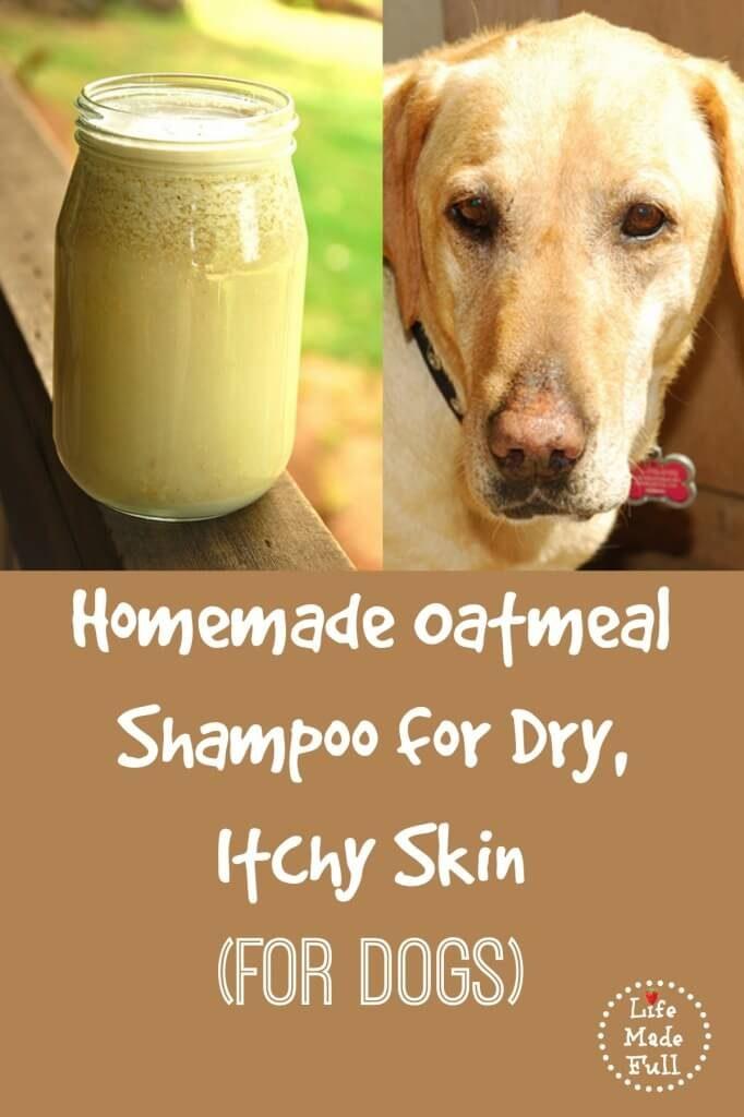 homemade dog shampoo recipe