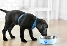 hypoallergenic food for dogs