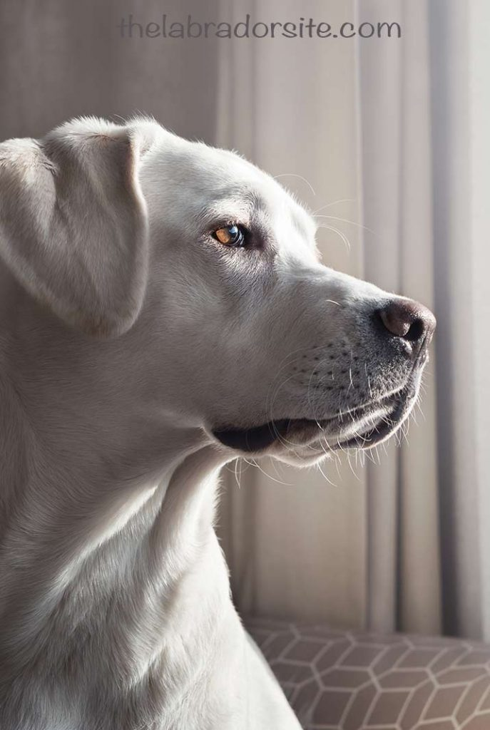 Find out how your dog will feel and behave when she is in heat