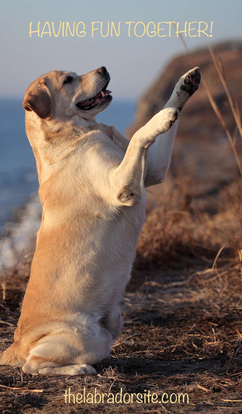 You can still have fun when with your dog in heat. Find out how to exercise her and keep her safe during her season
