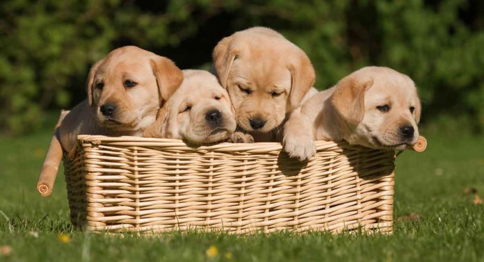 When Can Puppies Go Outside: Is It Safe To Take Your Puppy Out Yet?