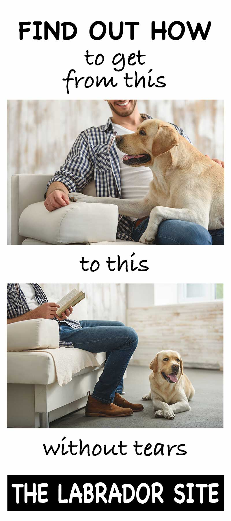 Attention seeking dog? Teach your dog to settle while you read or watch TV