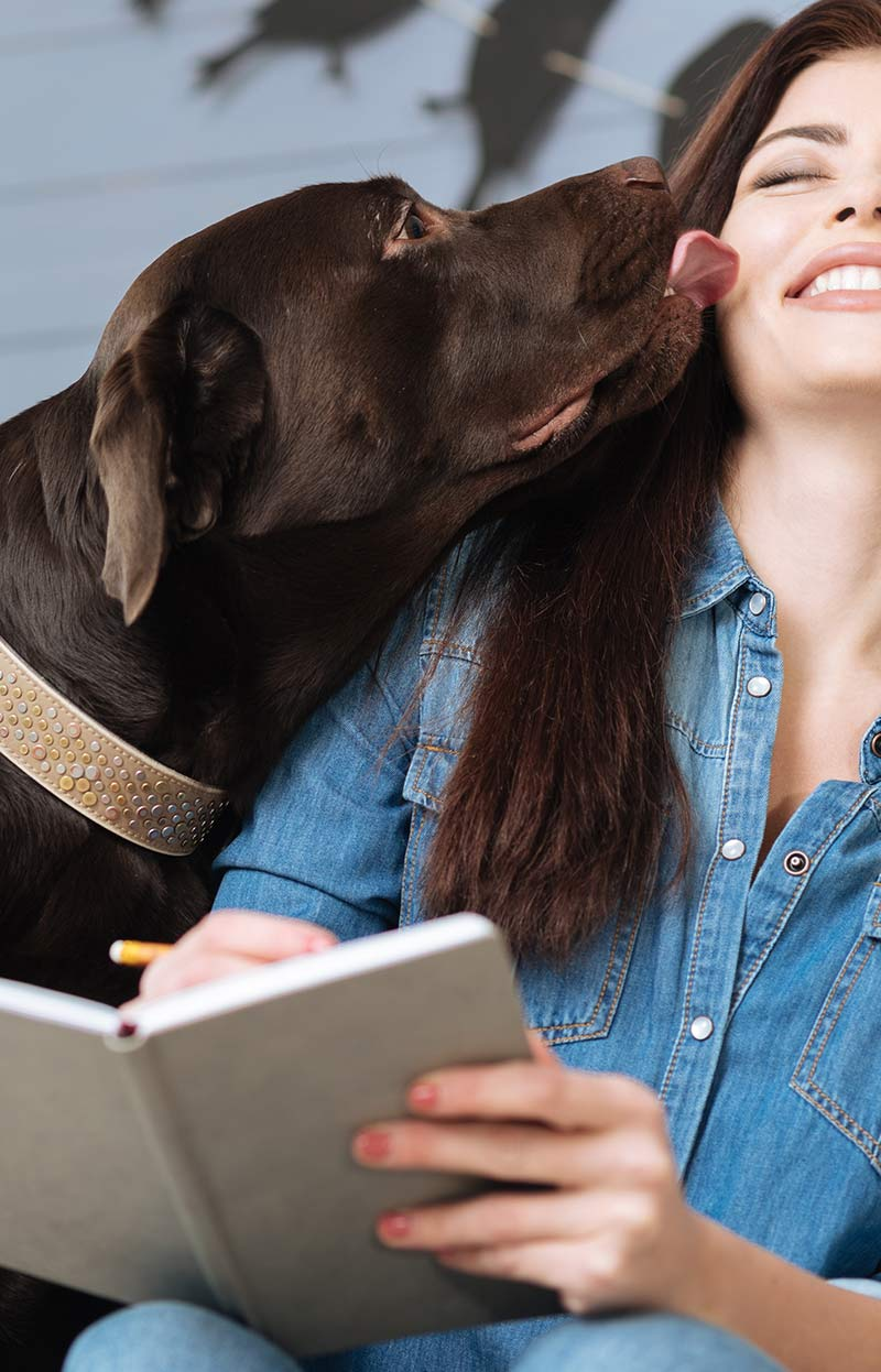 My dog won't leave me alone! What to do if your dog is annoying you in the evenings