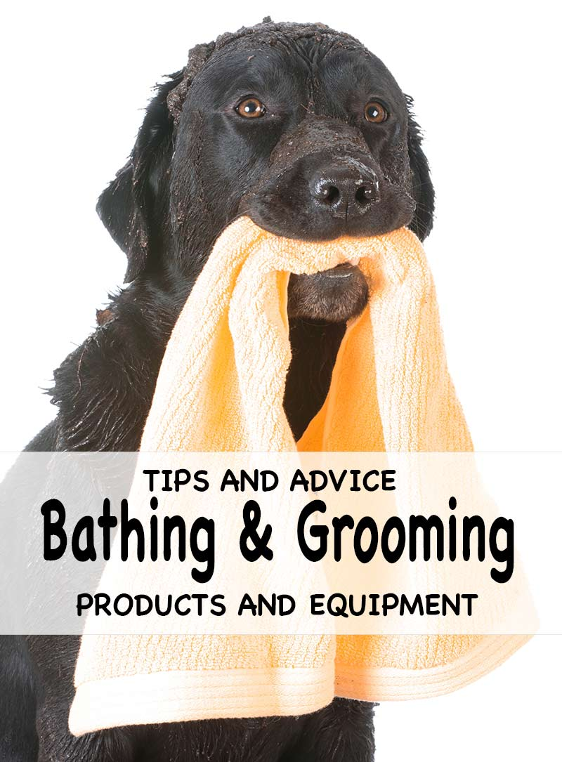 Top tips for grooming and bathing your Lab with lots of great product recommendations