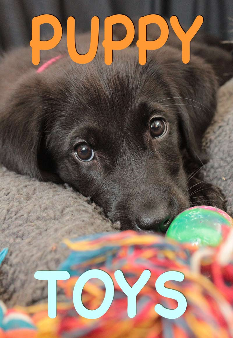 Our favorite puppy toys, a collection from The Labrador Site. Great ideas for gifts for new puppy owners, or just treat your puppy!