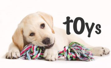 puppy toys to buy