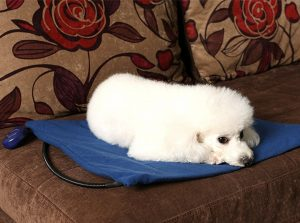 large dog beds choosing the best large and extra large dog beds for labs and