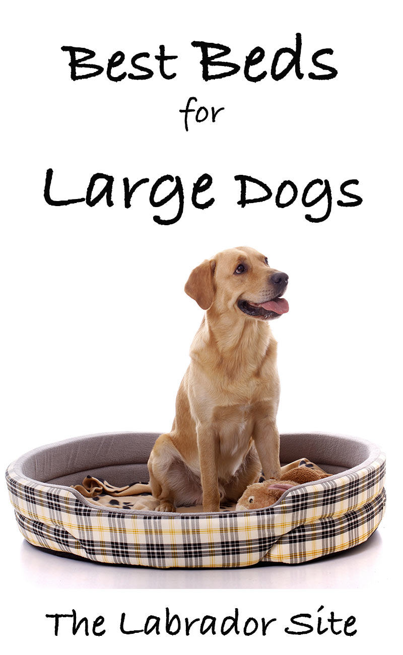Picture of: Best Large Dog Beds Reviews Of The Top 30 Beds For Large Breeds