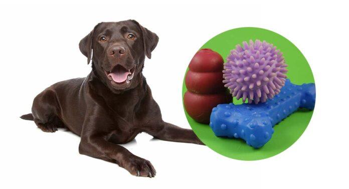 meilleurs jouets interactifs pour chiens