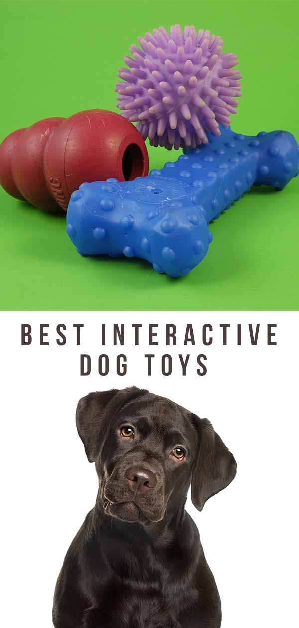 meilleurs jouets pour chiens interactifs