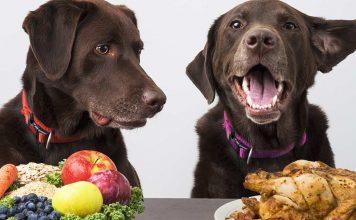 Help, my dog ate chicken bones