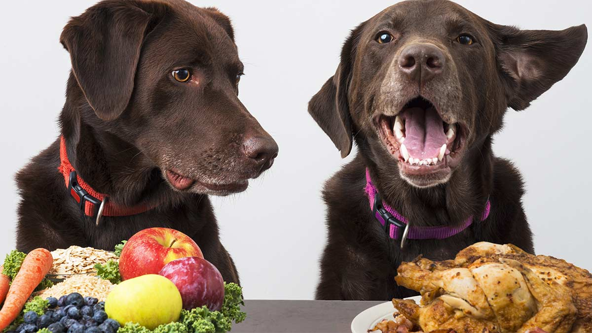 What To Do If My Dog Eats Chicken Bones