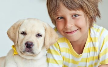 Dogs and kids - how to play safely with a dog