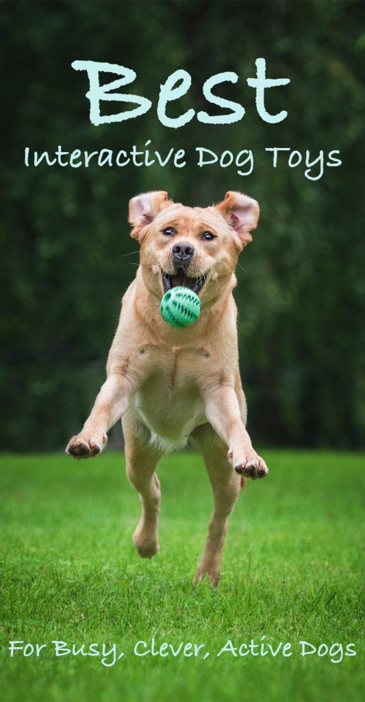 Interactive Dog Toys - The Best Choices For Lively Intelligent Dogs