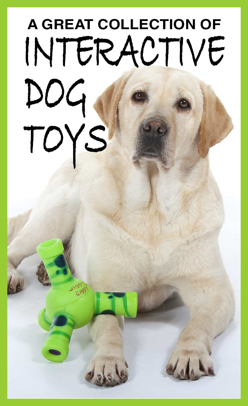Interactive dog toys go that little bit further and provide dogs with challenges and opportunities for more play. This is a collection of our favorites