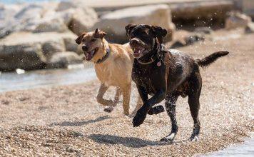 Dog Recall - Recall tips and Advice