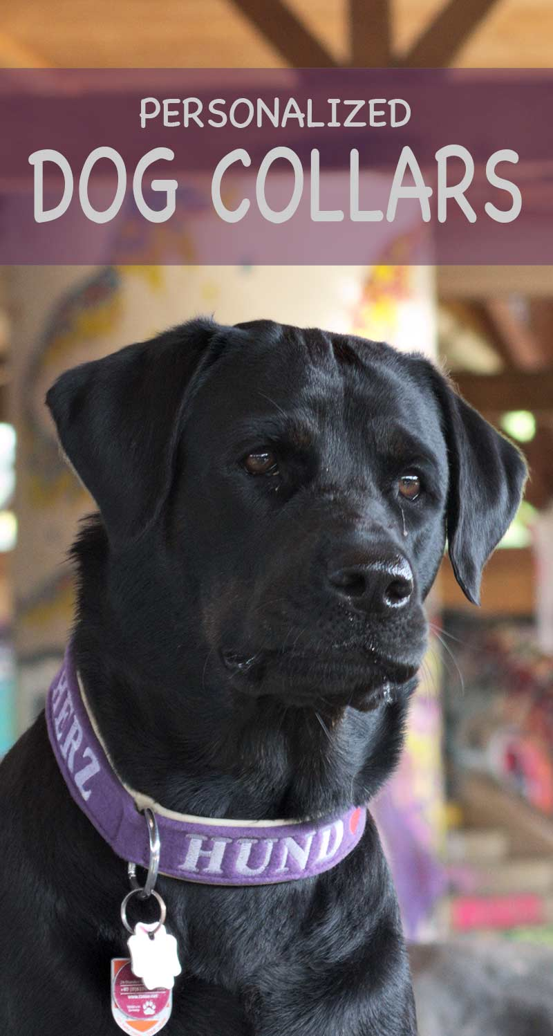 Personalized dog collars are a lot of fun. We look at a range of personalized collars for Labradors and other large breeds