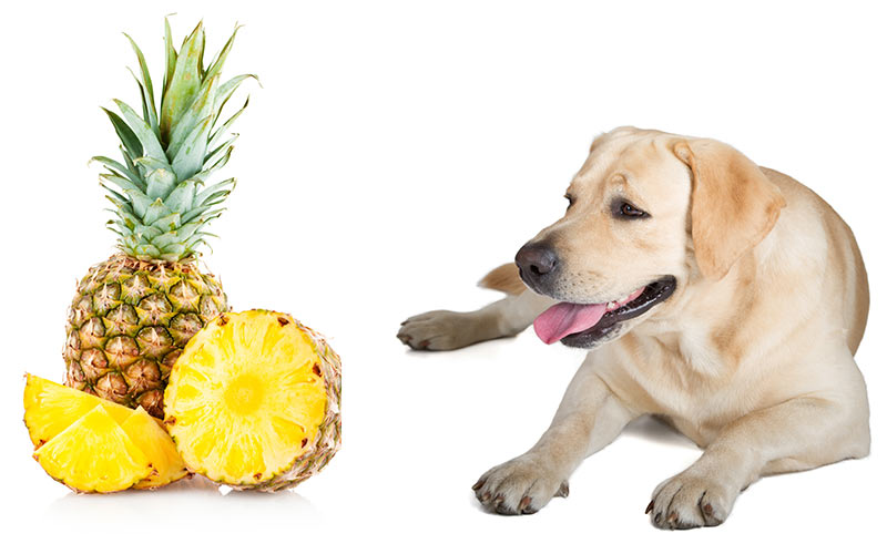 Pineapple For Dogs Eating Poop