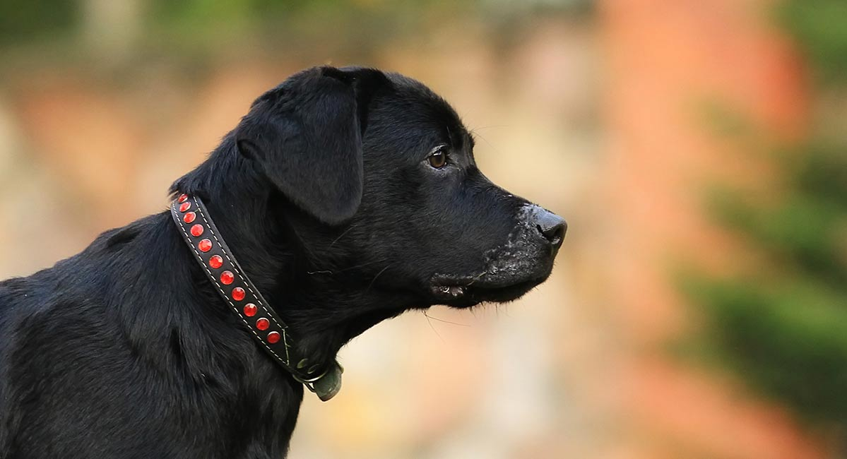 A Collection Of Our Favorite Collars  U0026 Harnesses For
