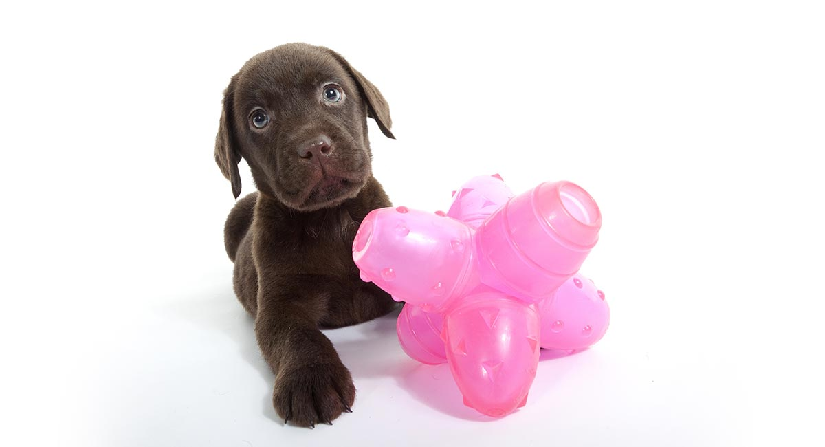 Best Dog Puzzle Toys - The Top Choices Reviewed