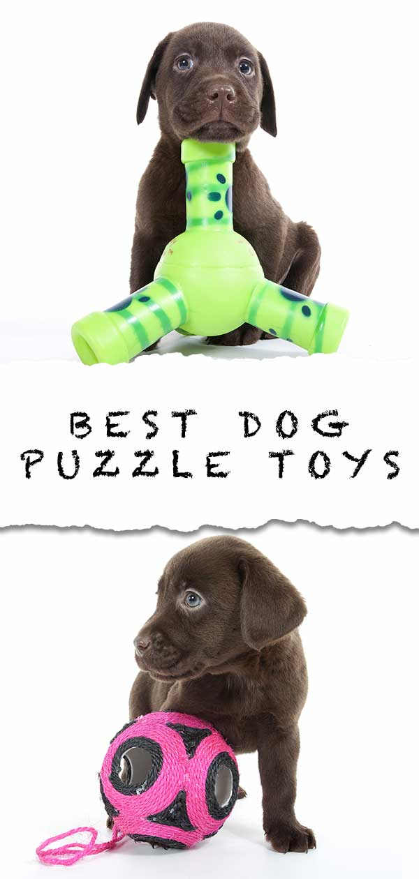 best dog puzzle toys
